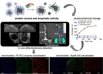 Using protein corona composition to target nanoparticles to atherosclerosis