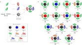One-step synthesis of a library of multifunctional nanoparticles
